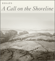 A Call On The Shoreline